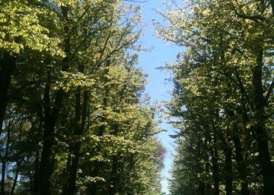Viale Garibaldi, 2 minute walk